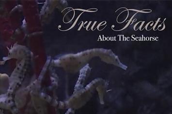 true facts seahorse