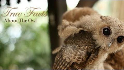 true facts owls