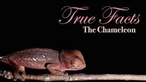 true facts chameleon