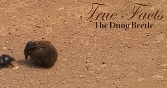 true facts dung beetles