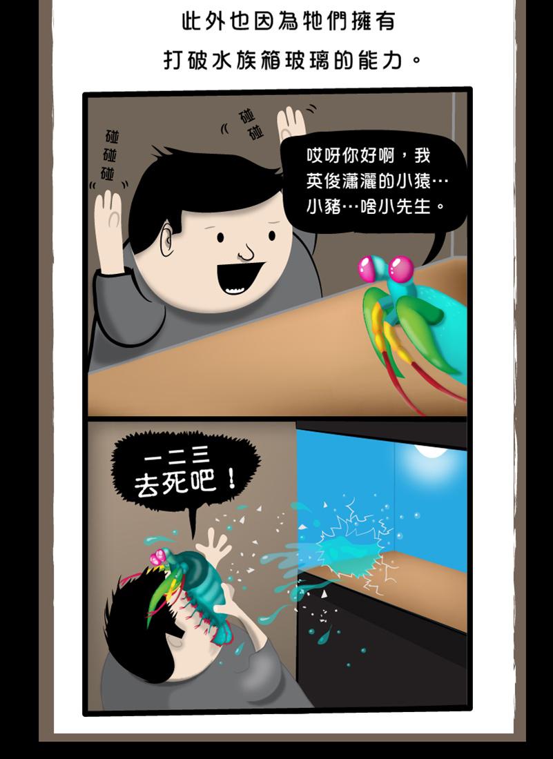 螳螂蝦-11