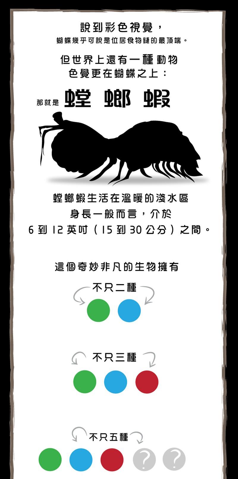 螳螂蝦-3