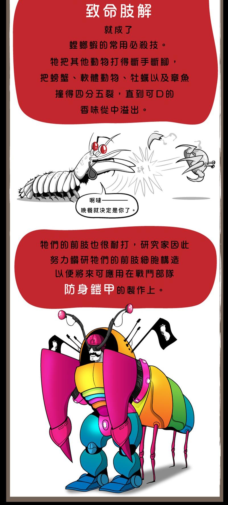 螳螂蝦-9
