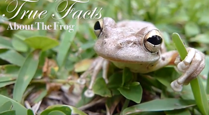 true facts frog