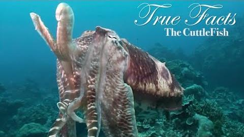 true facts cuttlefish