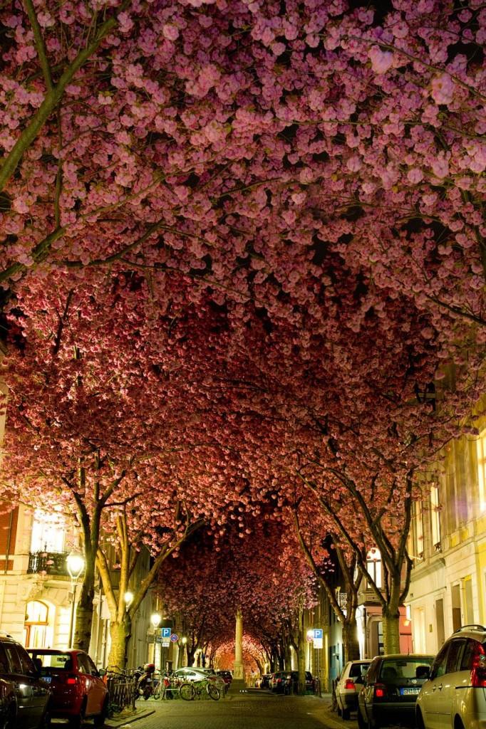amazing-tree-tunnels-1-682x1024