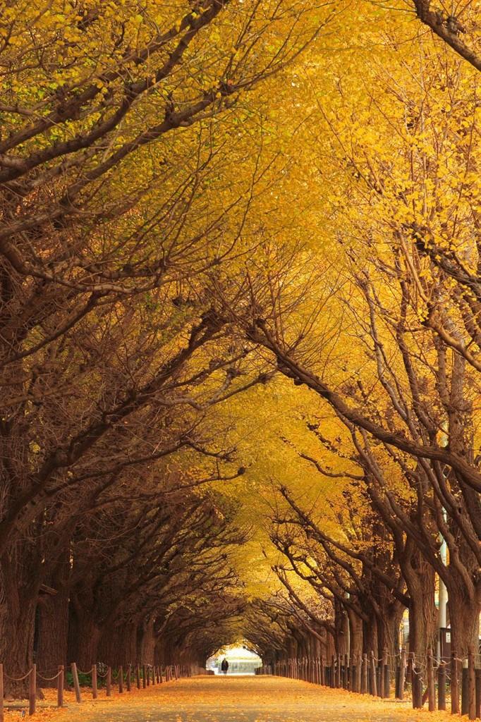 amazing-tree-tunnels-10-682x1024
