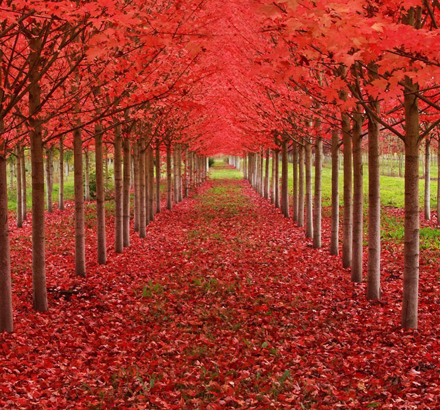 amazing-tree-tunnels-13