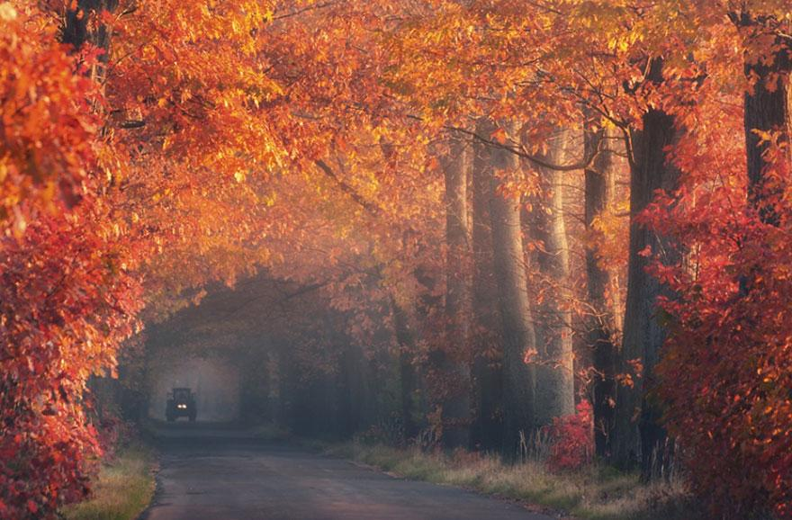 amazing-tree-tunnels-14