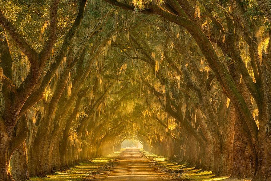 amazing-tree-tunnels-18