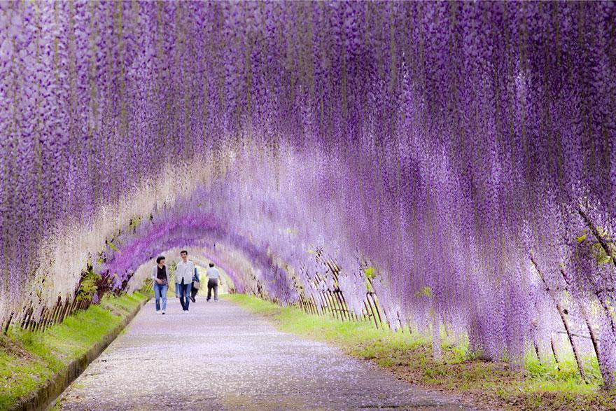 amazing-tree-tunnels-3-2
