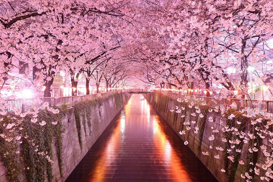 amazing-tree-tunnels-5