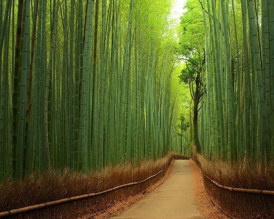 amazing-tree-tunnels-6