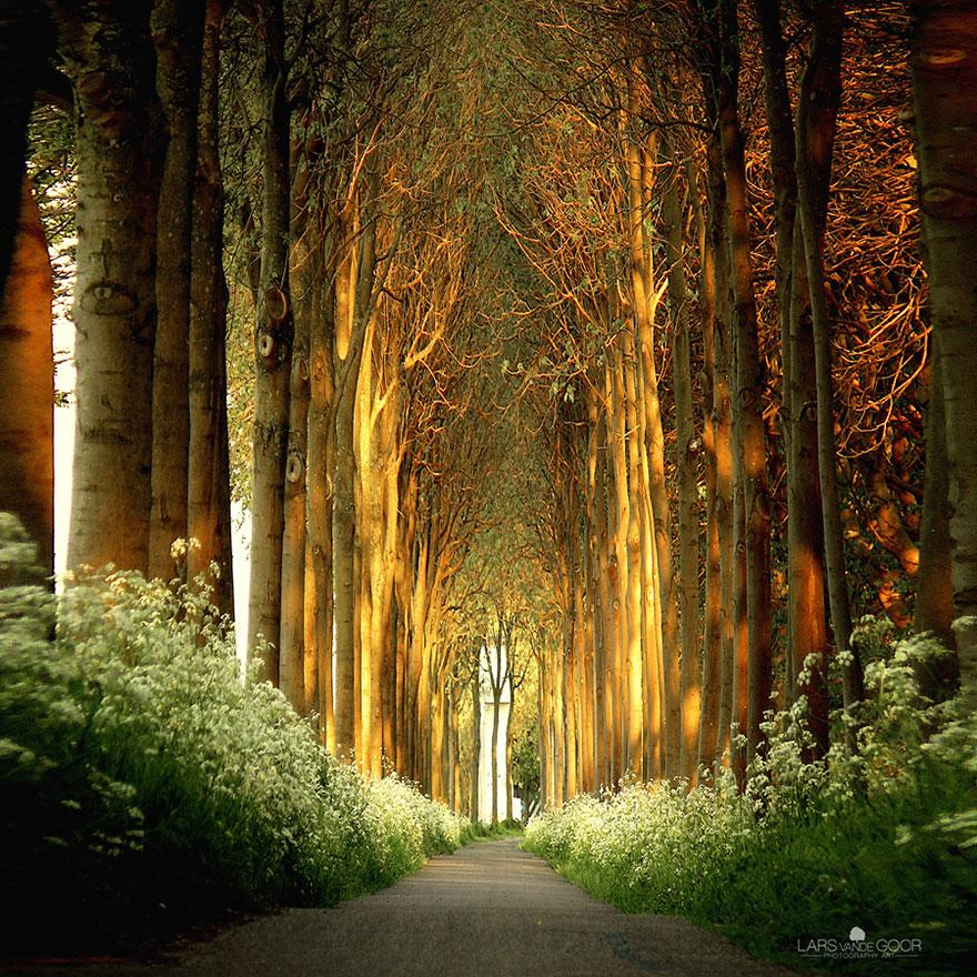 amazing-tree-tunnels-7