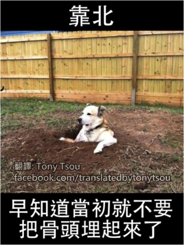 DogBuryBone