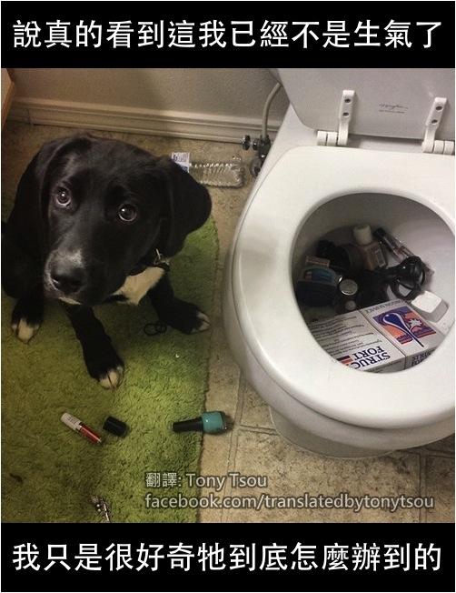 DogToiletClog
