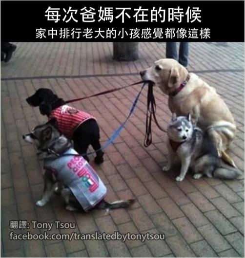 ResponsibleDogs