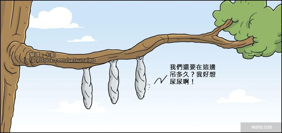 20140531 結繭