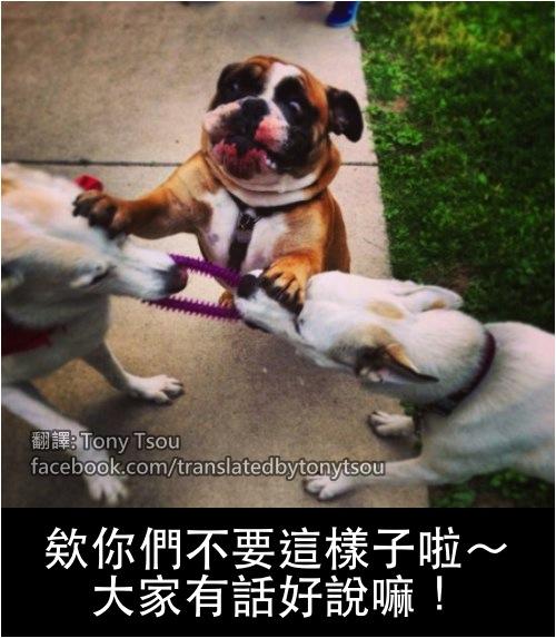 DogFightHelp