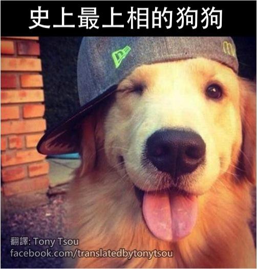 DogPhotogenic