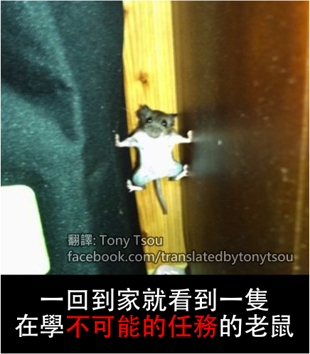 MouseMI2