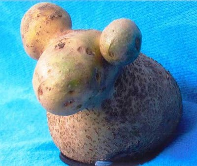 Sheep-potato-620x