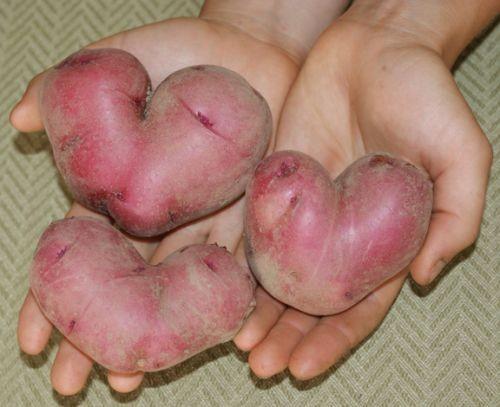 heart-shaped-potatoes-620x