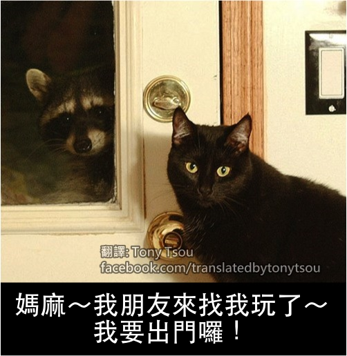 CatRacoonFriend