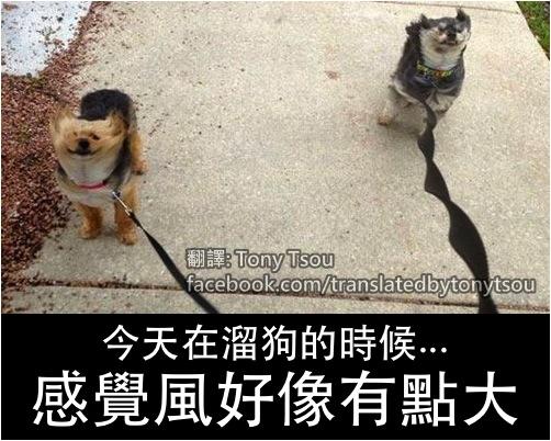 DogWalkWindy