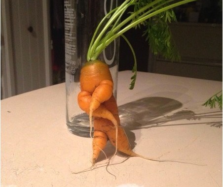 HipHopCarrot