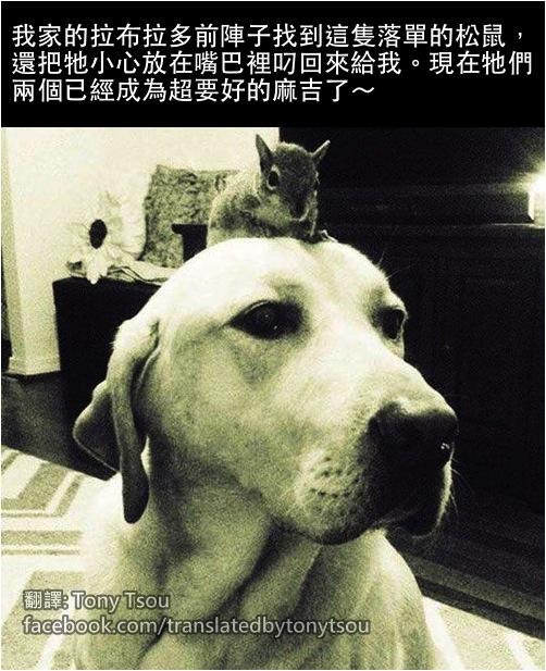 DogLabSquirrel