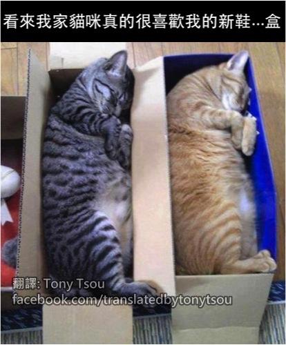 CatShoeBox