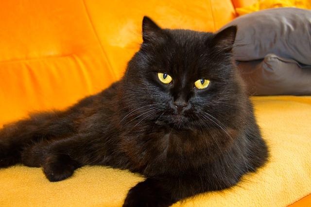 cat-447362_640