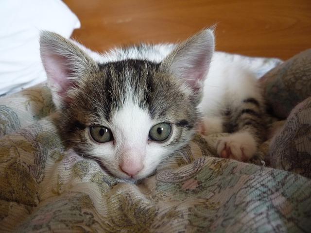 cat-451710_640