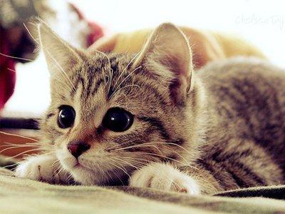 Cute-Cat-58