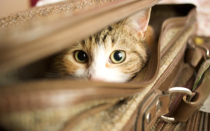 82804_story__cat-in-a-suitcase