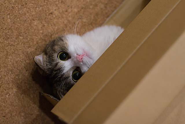 hidden_cat_photography_4