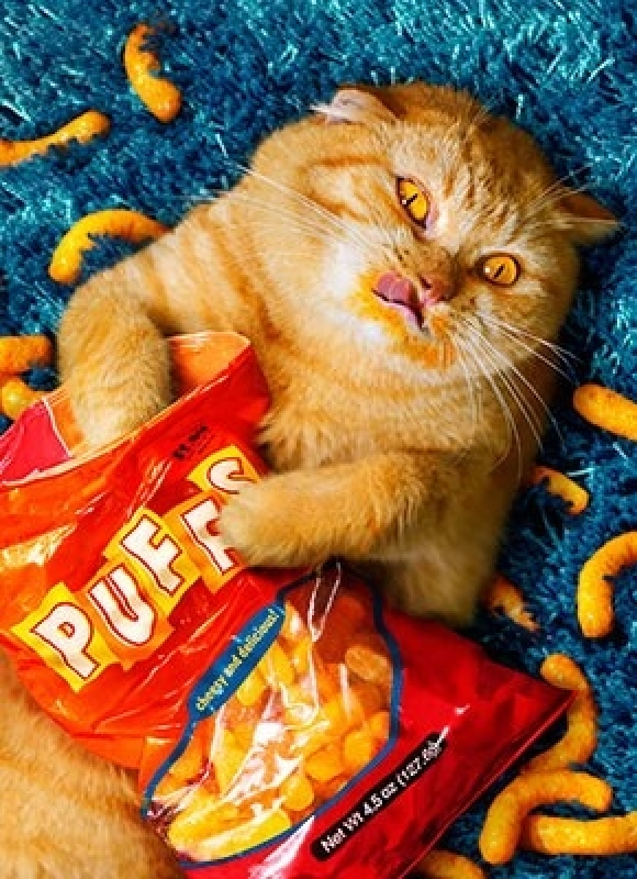 nyam3fat-cat-eating-cheetos