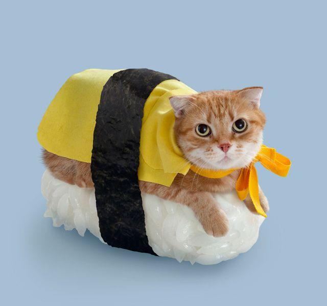 Sushi-Cat-Halloween-Costume.jpg