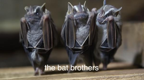 1.蝙蝠三兄弟