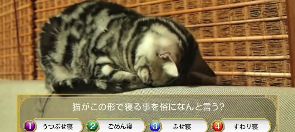 クイズRPG 魔法使いと黒猫のウィズ CM ごめん寝編 - YouTube [720p]_2015321233241