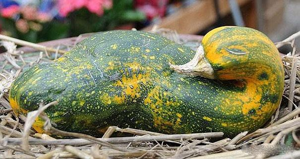 funny-shaped-vegetables-fruits-6-620x