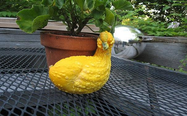 funny-shaped-vegetables-fruits-9-620x