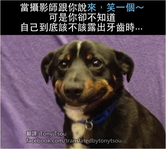 DogSmileAwkward