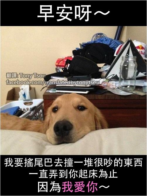 DogWakeUpWagTail