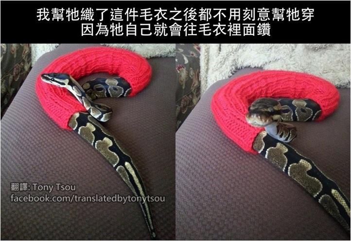 SnakeSweaters